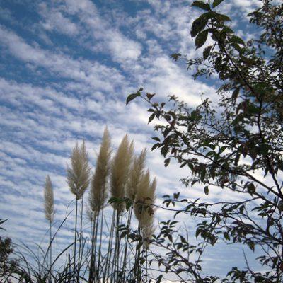 伊豆の秋の風景です
