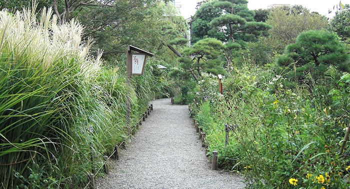 散歩へ行こう 〜向島百花園〜