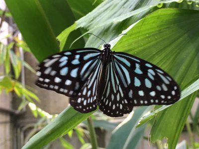 蝶に誘われて