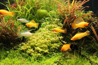 水を魚と緑と流れ