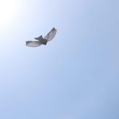 とんび凧揚げ