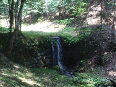 奥多摩水源林でおいしい水を育む