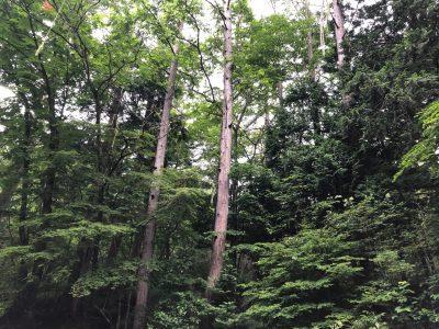 健全な森とは