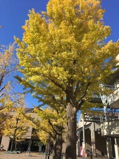 もみじ葉の 色もかわるや 秋の空