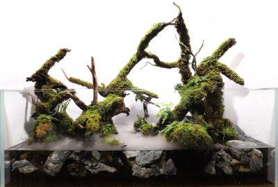 苔の成長を楽しむ