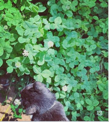 黒猫パトロール
