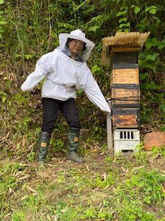 養蜂始めました
