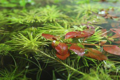 水草の成長と色合い