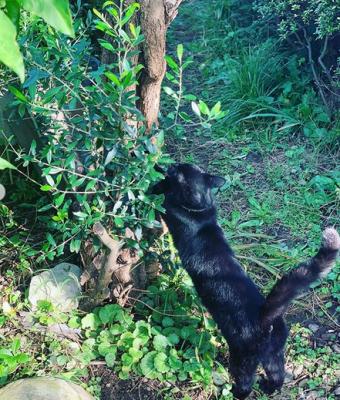 オリーブの木と猫