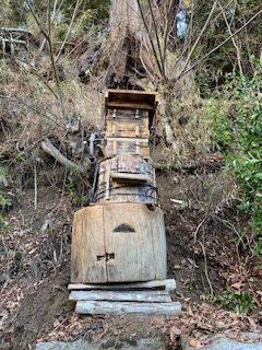 日本蜜蜂 分蜂準備